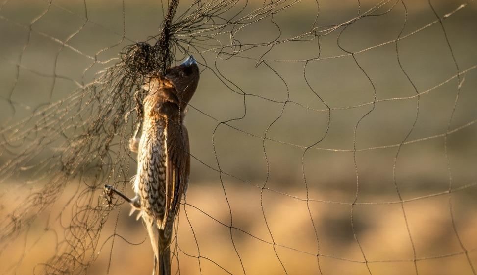Vietata la caccia tradizionale nel Delta del Po Storica sentenza della Corte europea