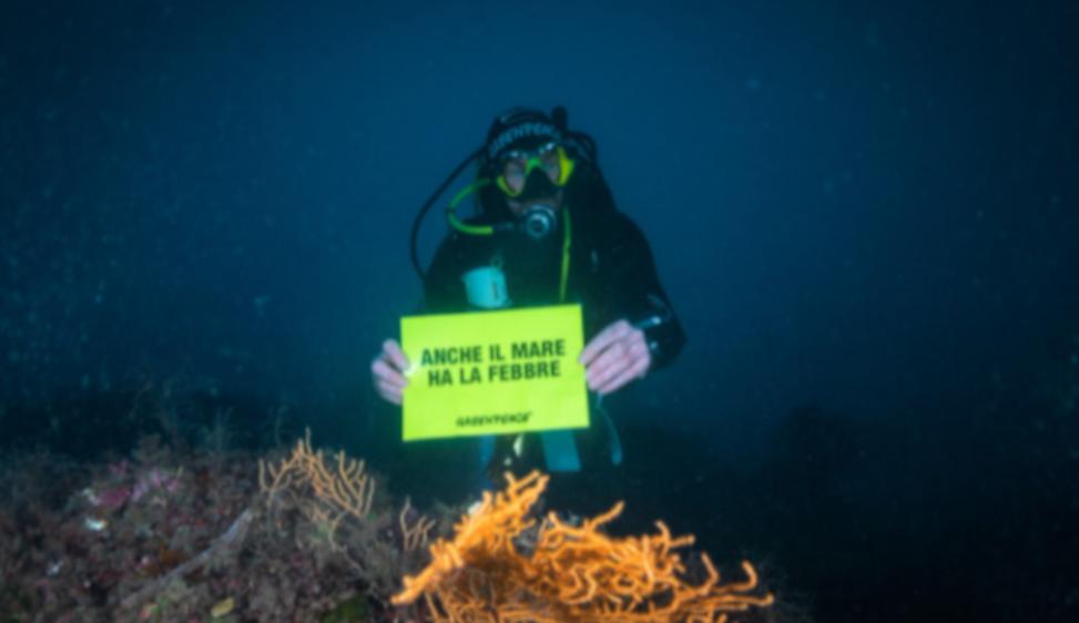 Il Mediterraneo si scalda: la biodiversità è in pericolo