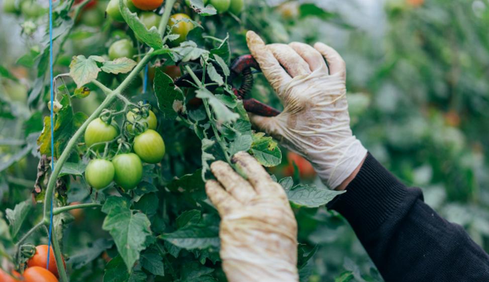 La nuova Politica agricola europea non rispetta il Green Deal e delude ambientalisti e piccoli agricoltori